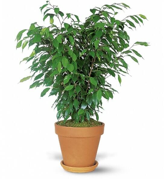 plant as a gift for wedding