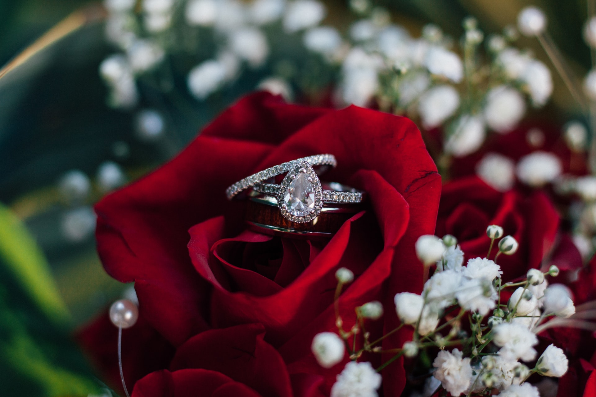 Two engagement rings in a red rose